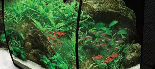 Aquarium coloré