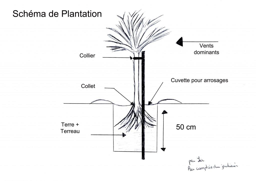 La plantation des racines nues
