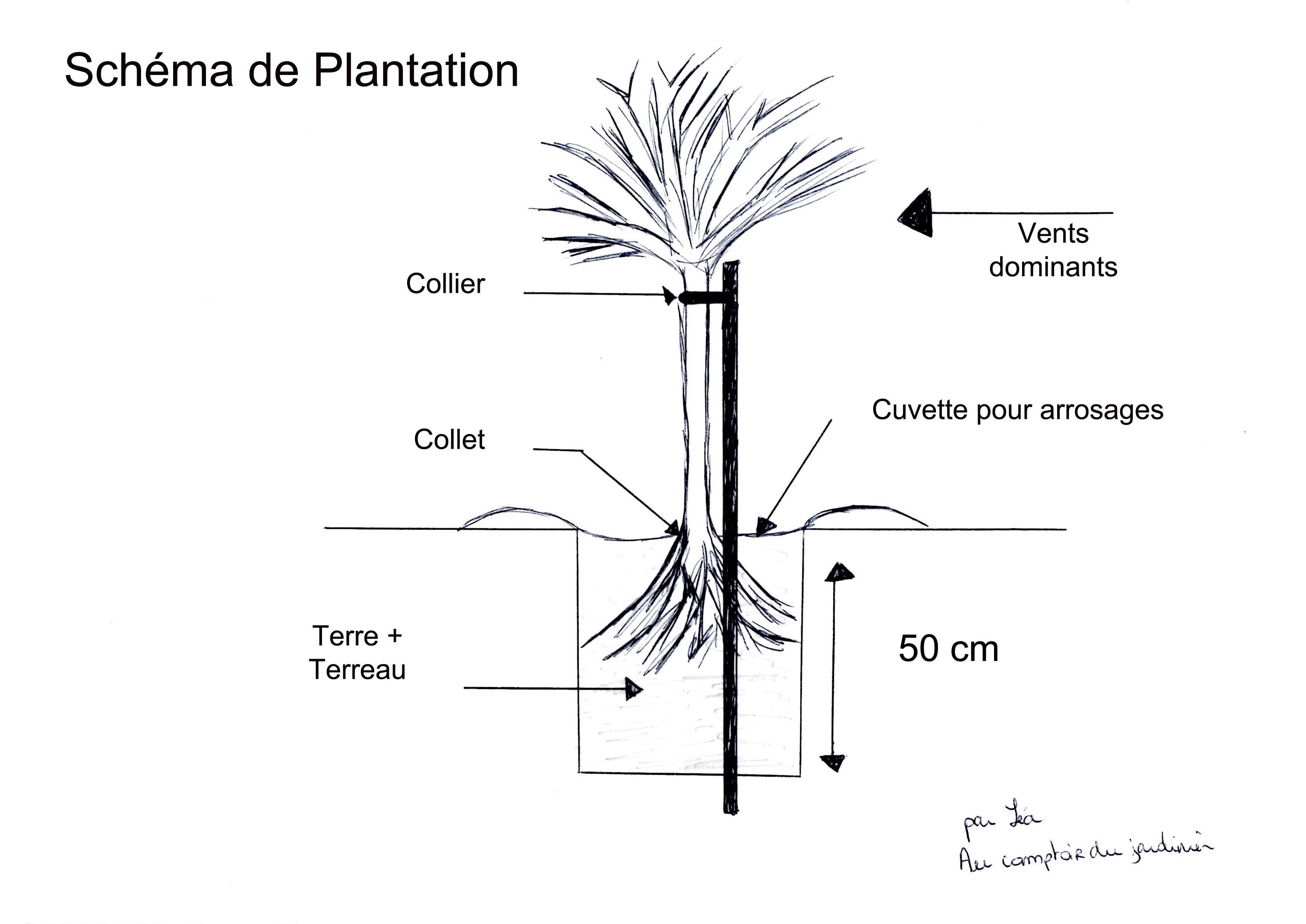 La plantation des racines nues au comptoir du jardinier for Conseil de jardinier