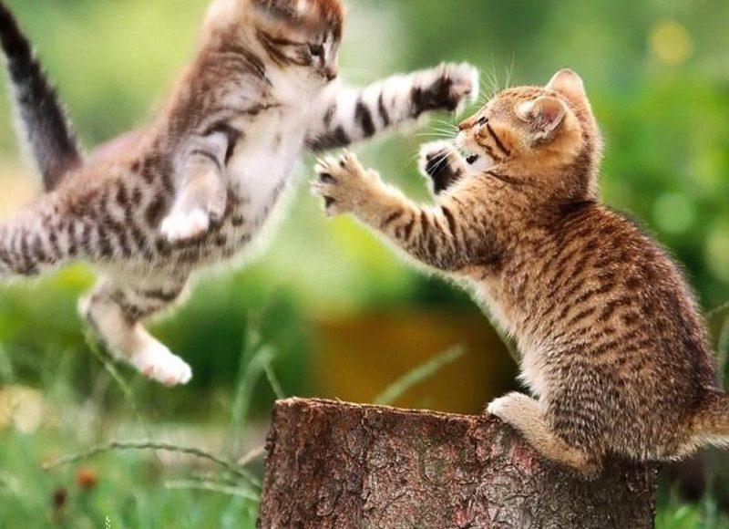 Terrain de jeux pour chats