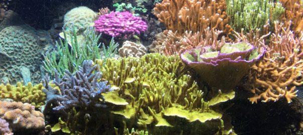 Entretenir son aquarium