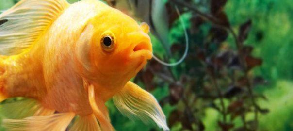 Nourriture vivante poisson