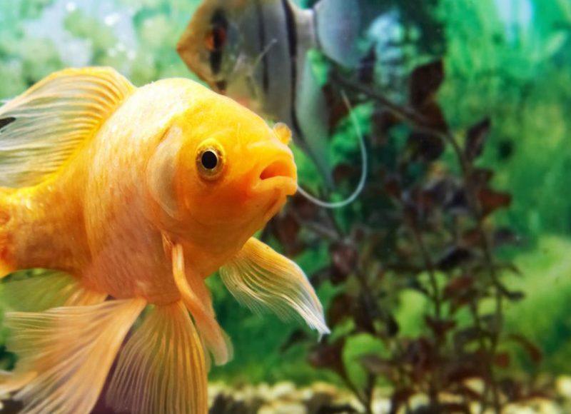 Nourriture vivante pour poissons au comptoir du jardinier for Nourriture a poisson