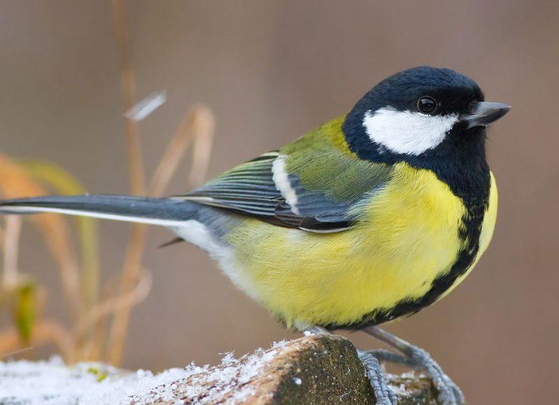 Nourrir les oiseaux sauvages