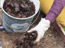 Conseils préparation du sols avant plantation