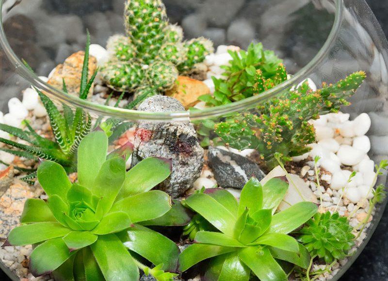 Faites votre terrarium maison