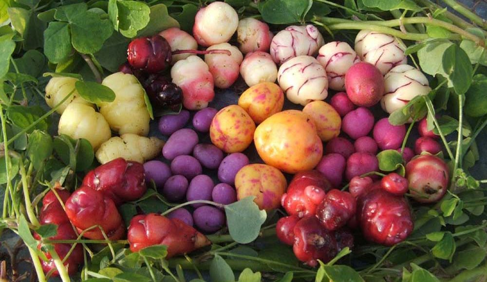 Légumes anciens et originaux