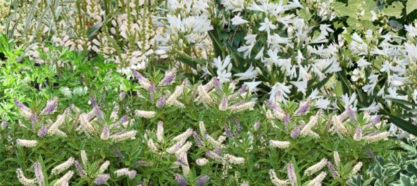 Conseils jardin au comptoir du jardinier for Jardinier conseil