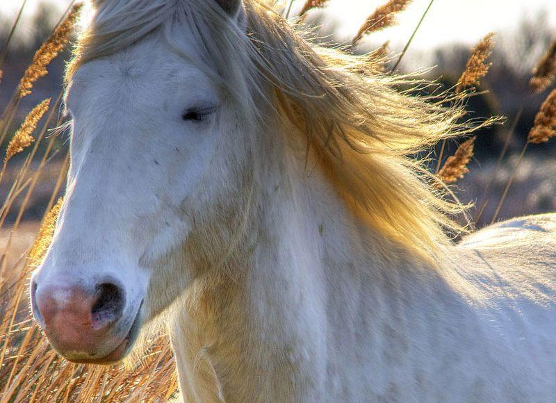 Pensez au bien -être de vos chevaux