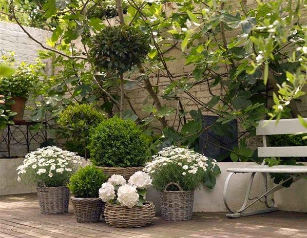 Une ambiance dans son jardin au comptoir du jardinier for Conseil de jardinier