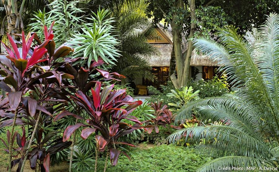 Une ambiance dans son jardin au comptoir du jardinier - Comptoir poisson exotique ...
