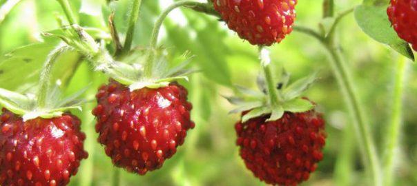 Recette avec fraises