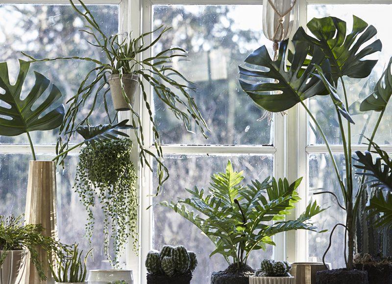 Déco rebords de fenêtre