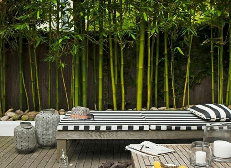 bambou gramin e donnez de la structure votre jardin au comptoir du jardinier. Black Bedroom Furniture Sets. Home Design Ideas