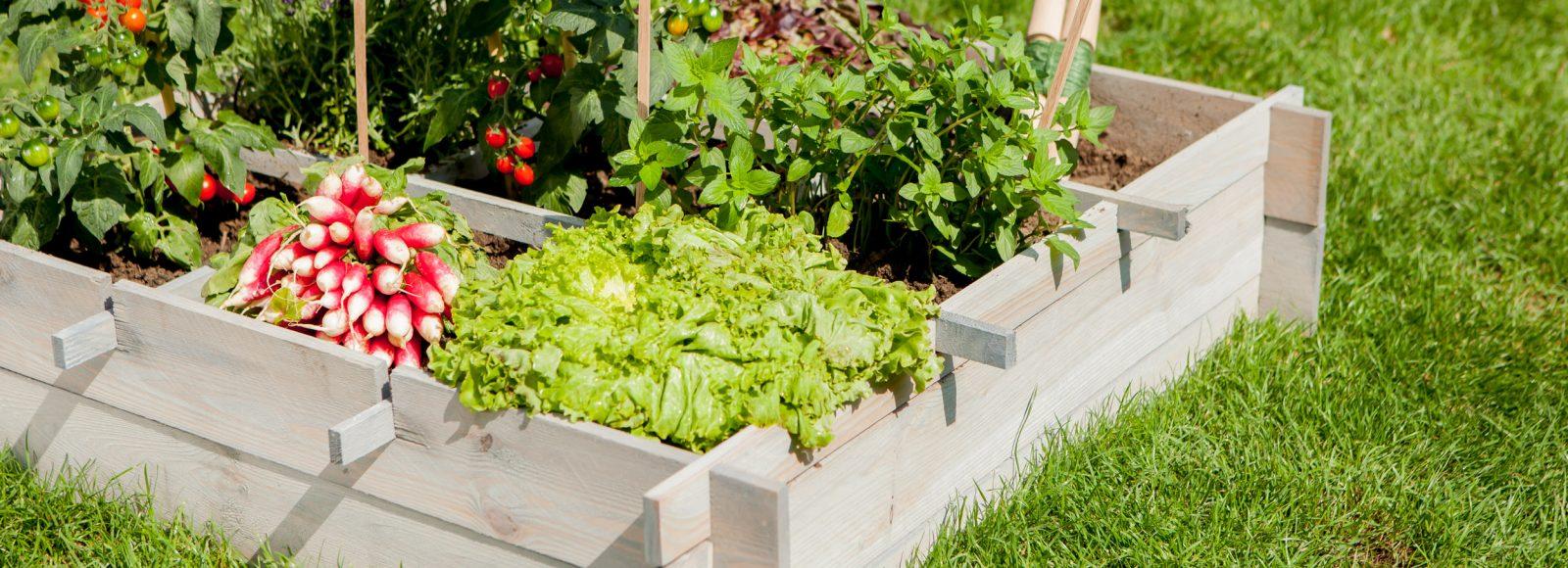 que semer et r colter dans votre potager en ao t au comptoir du jardinier. Black Bedroom Furniture Sets. Home Design Ideas
