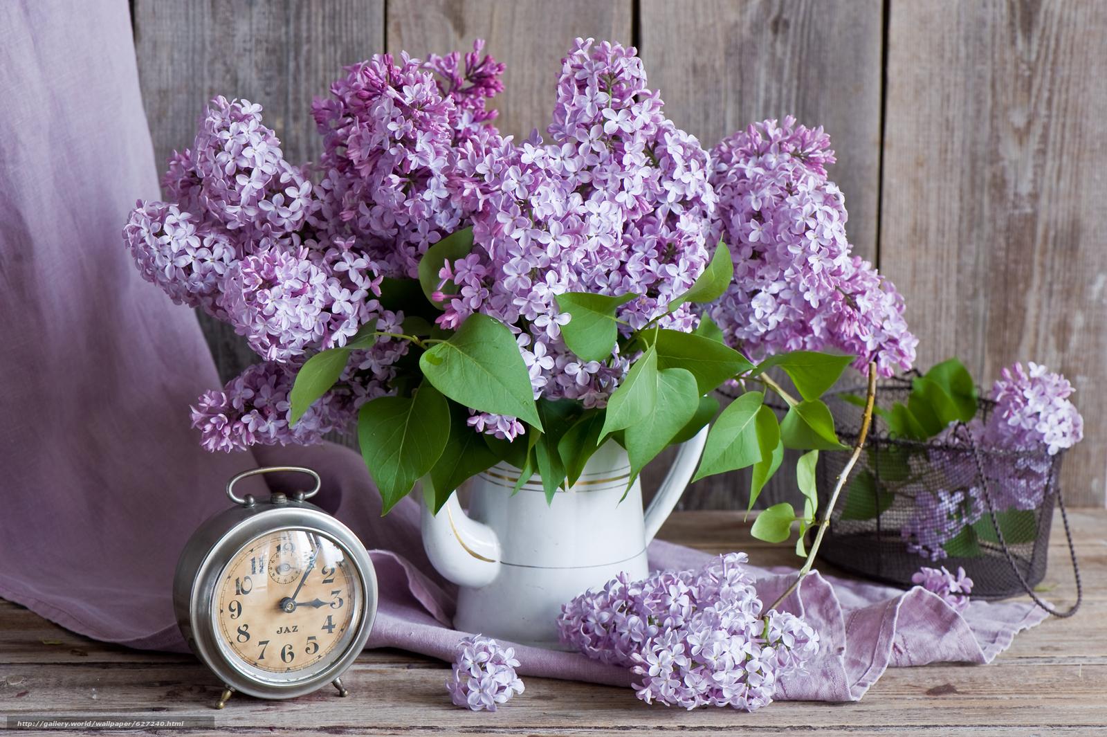 Choisir sa variété de Lilas – Au Comptoir du Jardinier