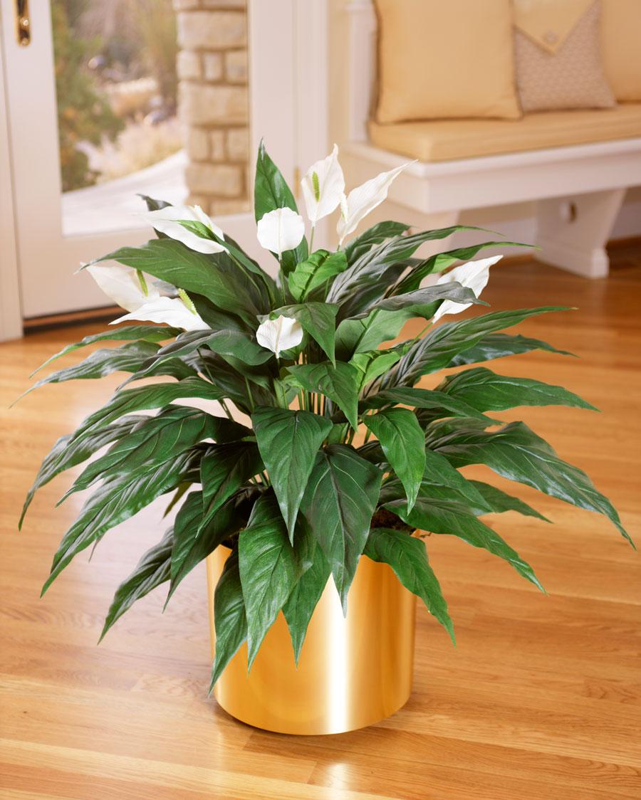 plantes-dépolluantes