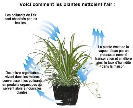 Schéma dépollution de l'air par les plantes