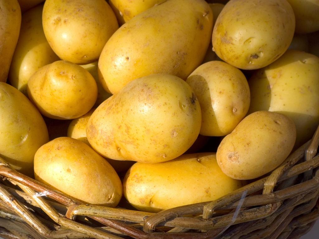 Dolwen notre pomme de terre coup de c ur au comptoir du jardinier - Pomme de terre coup de soleil ...